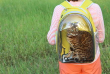 Woman Carrying His Cat In A Tr...