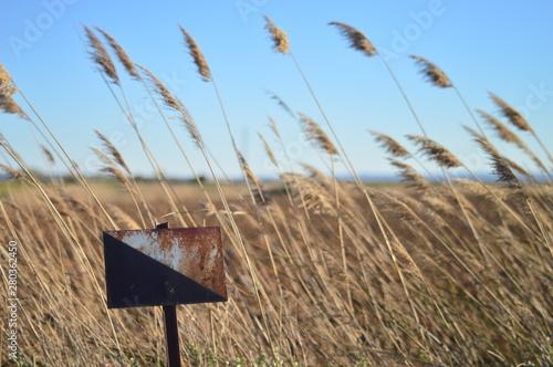 señal de caza osxidada entre espigas Canvas Print