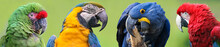 Colorful Group Of Macaws - 4 S...