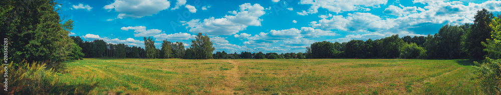 Fototapety, obrazy: giant panorama of grass field in the forest
