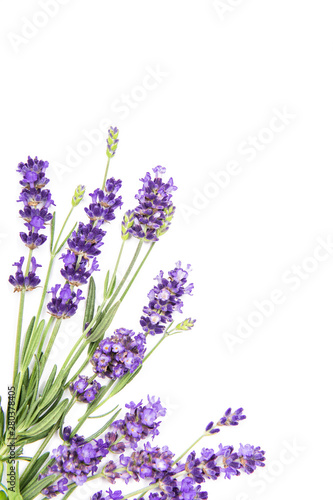 Fototapeta Lavender flowers white background Floral obraz