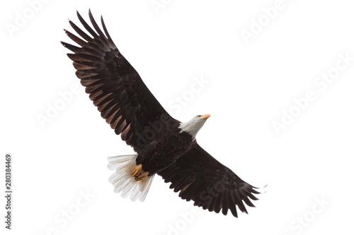 Poster Aigle Eagle Drifts Across the Sky