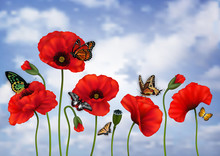 Poppy Flowers And Butterflies