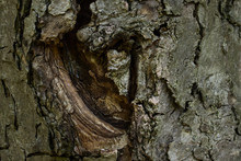 Texture Of Tree Bark Partially...