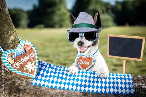 Poster Crazy dog bavarian beer dog