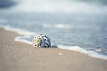 Sea Shell On The Seashore In T...