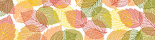 Autumn  Background With Leaves. Nature Banner. Frame With Plants. Bright Template