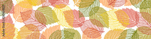 Fototapeta Autumn  background with leaves. Nature banner. Frame with plants. Bright template  obraz