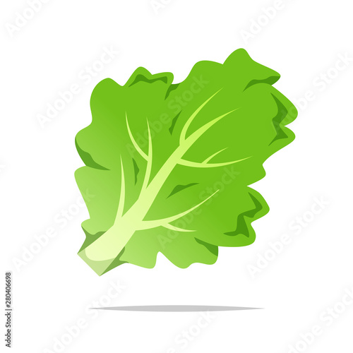 Obraz Green lettuce vector isolated illustration - fototapety do salonu