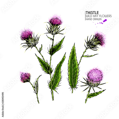 Stampa su Tela Hand drawn wild hay flower