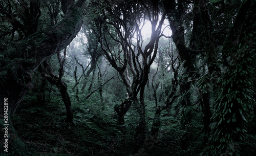 Fotografie, Obraz  Deep tropical jungle in darkness