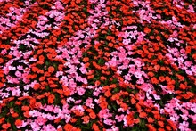 Lot With Red And Pink Flowers ...