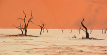 Deadvlei Is A White Clay Pan L...