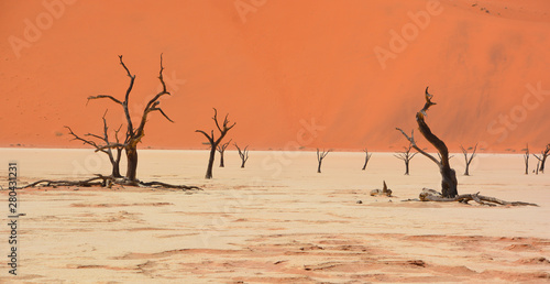 Autocollant pour porte Corail Deadvlei is a white clay pan located near the more famous salt pan of Sossusvlei, inside the Namib-Naukluft Park in Namibia. Also written DeadVlei or Dead Vlei, its name means