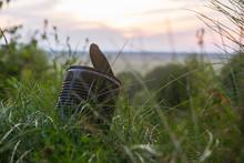Rusty Tin In The Grass