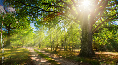 Autocollant pour porte Route dans la forêt forest road and old oak forest with rays of the rising sun