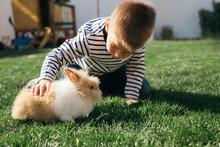 Little Boy Petting A Bunny In Garden