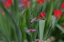 Hummingbirds 850_4216