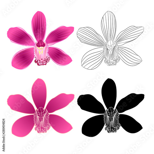 Tropical Orchid Cymbidium Purple Flower Natural And Outline And