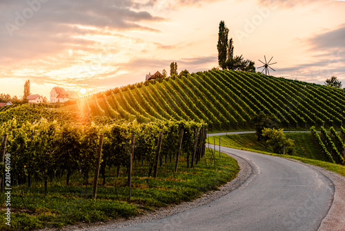 Foto op Aluminium Wijngaard Asphalt road leading through country side of south Austrian Vineyards