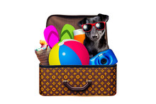 Little Dog Packed Vintage Suitcase Full Of Items For Summer Holidays Travel, Vacation, Travel And Trip Isolated On White