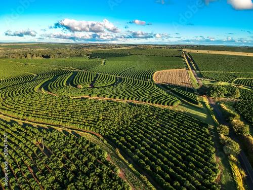 Photo aerial viewof green coffee field in Brazil