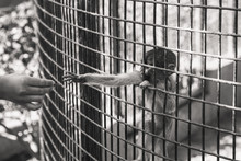 The Monkey Hand Holding The Cage