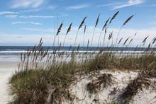 Florida Dune And Ocean View