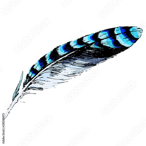 Valokuvatapetti Feather of blue jay bird. Hand drawn art.