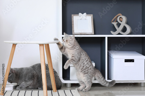 Curious cute cats at home Canvas Print