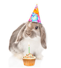 Rabbit In Party Hat With Birthday Cupcake With Burning Candle. Isolated On White Background