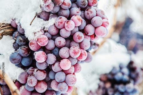 Foto  Ice wine