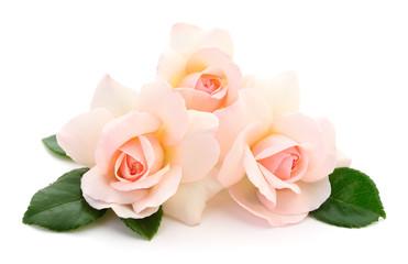 Beautiful pink roses.