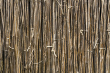 A Background Of Dry Reeds Draw...