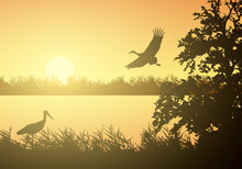 Realistic Illustration Of Wetland Landscape With River Or Lake, Water Surface And Birds. Stork Flying Under Orange Morning Sky With Rising Sun, Vector