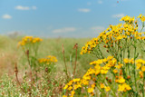 Fototapeta Panels - Wild grass with yellow flowers - beautiful summer landscape