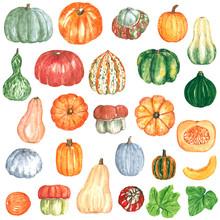 Big Pumpkin Squash Clipart Set...