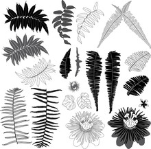 Vector Black And Grey Suburban Jungle Elements With Tropical Leaves And Wild Flower. Vector Illustration.