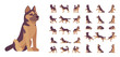 Shepherd dog set. Working breed, family pet, assistance, search service, rescue, police, and military help. Vector flat style cartoon illustration isolated, white background, different views, poses