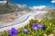 view over the mighty Aletsch Glacier in Switzerland