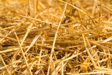 Surface Of Dry Yellow Straw Grass Background Texture After Havest For Abstract Background.