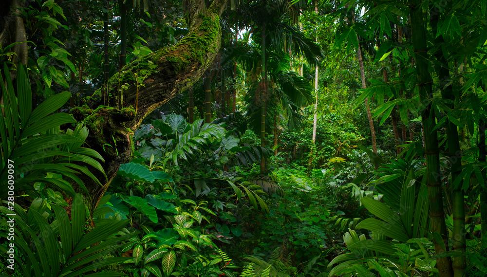 Fototapeta Southeast Asian rainforest with deep jungle