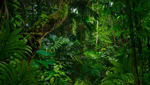 Southeast Asian Rainforest Wit...