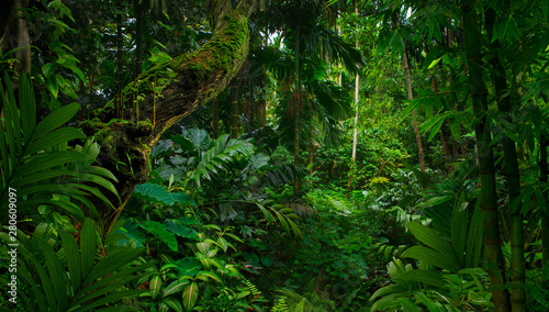 Southeast Asian rainforest with deep jungle Canvas Print