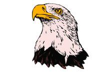 Vector Bird. Eagle Illustratio...