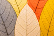 Leinwanddruck Bild - Close up leaf pattern