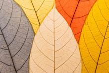 Close Up Leaf Pattern