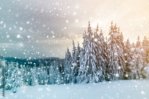 Montage in der Fensternische Licht blau Beautiful winter mountain landscape. Tall dark green spruce trees covered with snow on mountain peaks and cloudy sky background.
