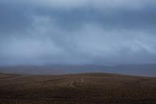 View Of Desert Landscape Again...