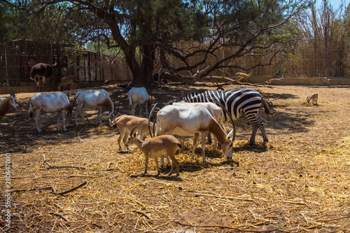 wild animals in zoo on natural background